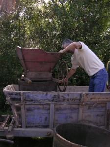 Vendanges à l'ancienne à Bruniquel (82)