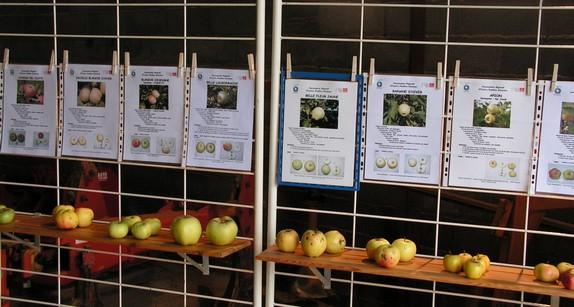 pour bien choisir, fiches informatives et spécimens de fruits