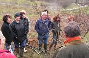 Arbres fruitiers planter tailler soigner greffer - Tailler un pecher ...