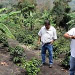 CaféTénango au Guatémala