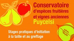 Taille et Greffe : Stages pratiques au Conservatoire  ... à Puycelsi (81)