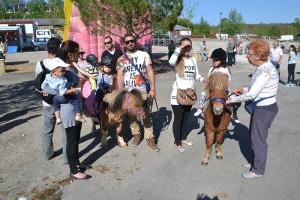 Prêts pour une  promenade à poneys !