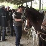 Fête du Cheval Monclar de Quercy