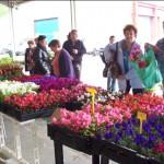 Festi'Fleurs à Monclar de Quercy (82)