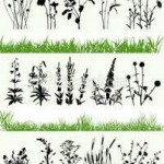 Bourse aux plantes - Giroussens (81)