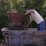 Vendanges à l'ancienne  - Bruniquel (82)