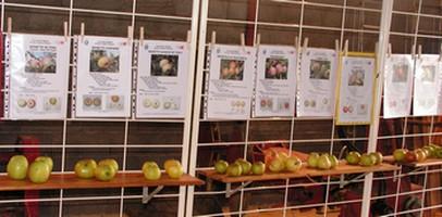 Fruits et fiches pour bien choisir